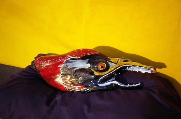 salmon-life-side-lg